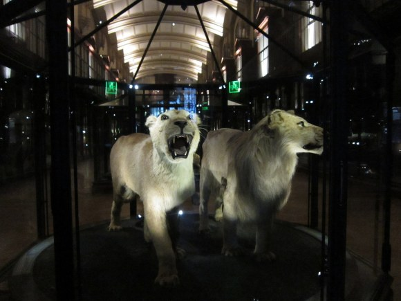 Gallery of extinct animals in Paris